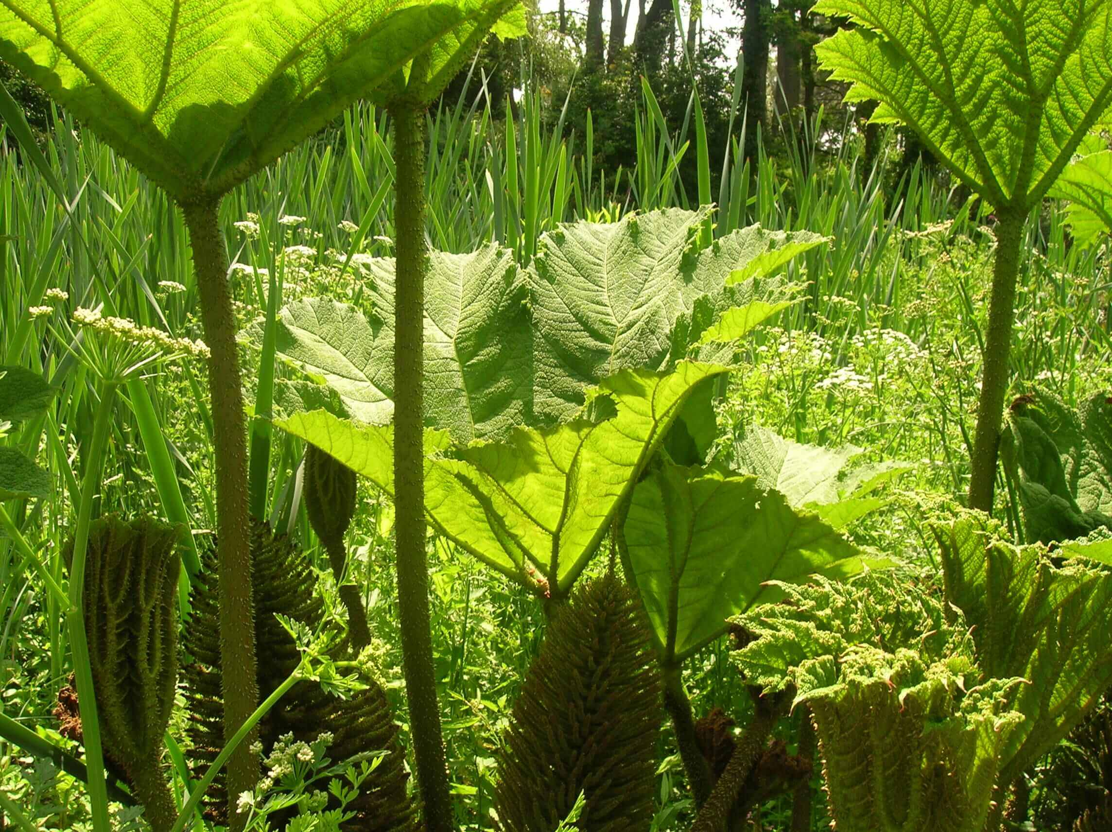 La bo te jardin accueil paysagiste sur le havre et for Entretien jardin le havre